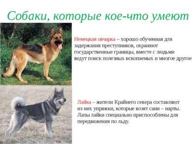 Собаки, которые кое-что умеют Немецкая овчарка – хорошо обученная для задержа...