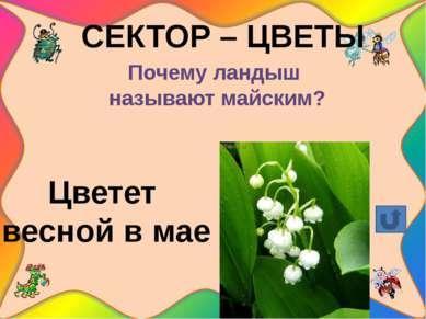 СЕКТОР - ДЕРЕВЬЯ Какое дерево имеет признаки и хвойного, и лиственного? листв...
