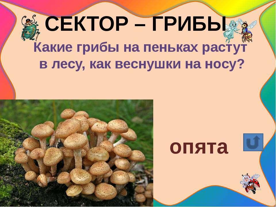 СЕКТОР – ГРИБЫ Какие грибы растут на белых ножках вдоль лесных дорожек, издал...