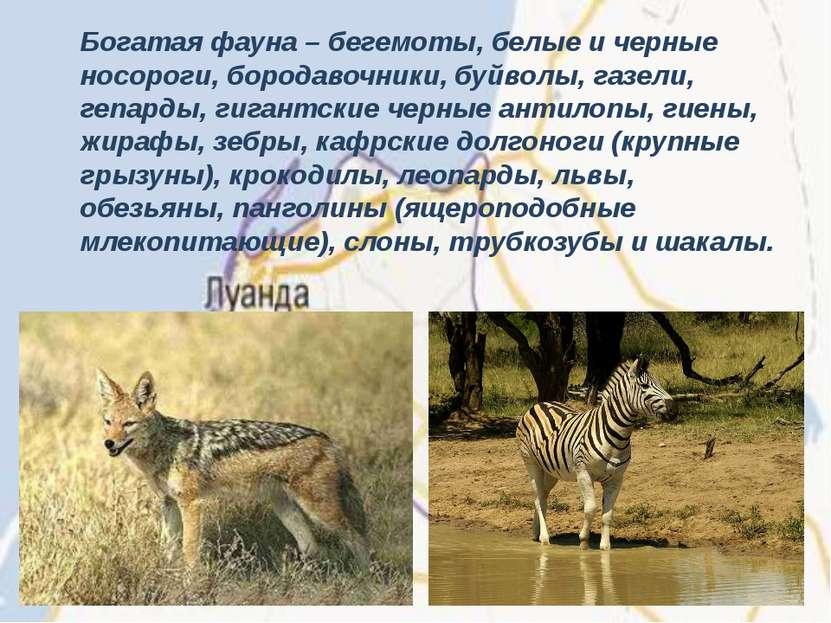 Богатая фауна – бегемоты, белые и черные носороги, бородавочники, буйволы, га...