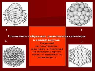 Схематичное изображение расположения капсомеров в капсиде вирусов. Спиральный...