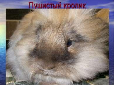 Пушистый кролик