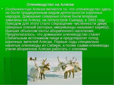 Оленеводство на Аляске Особенностью Аляски является то, что оленеводство здес...