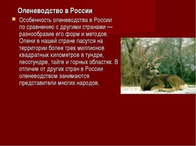 Оленеводство в России Особенность оленеводства в России по сравнению с другим...