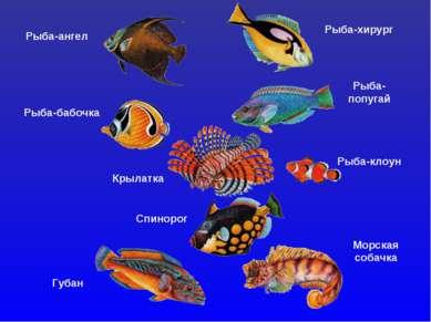 Рыба-ангел Рыба-хирург Рыба-бабочка Рыба- попугай Крылатка Рыба-клоун Спиноро...