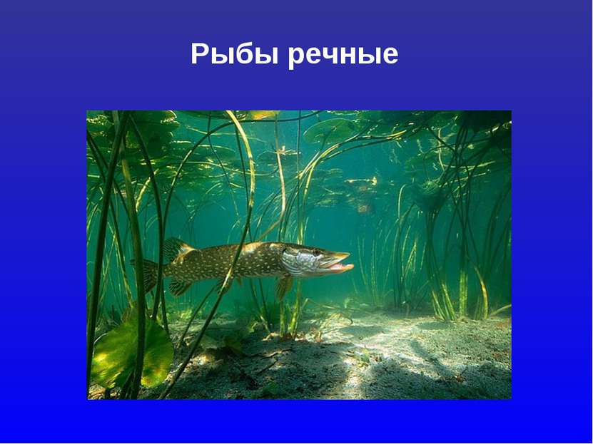 Рыбы речные