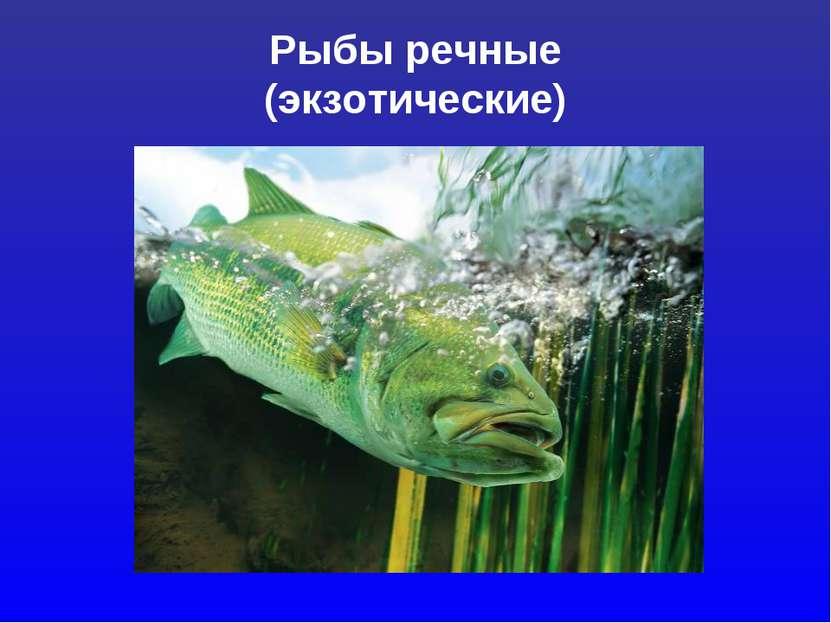 Рыбы речные (экзотические)