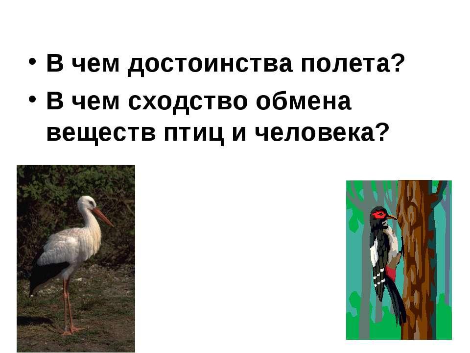 В чем достоинства полета? В чем сходство обмена веществ птиц и человека?