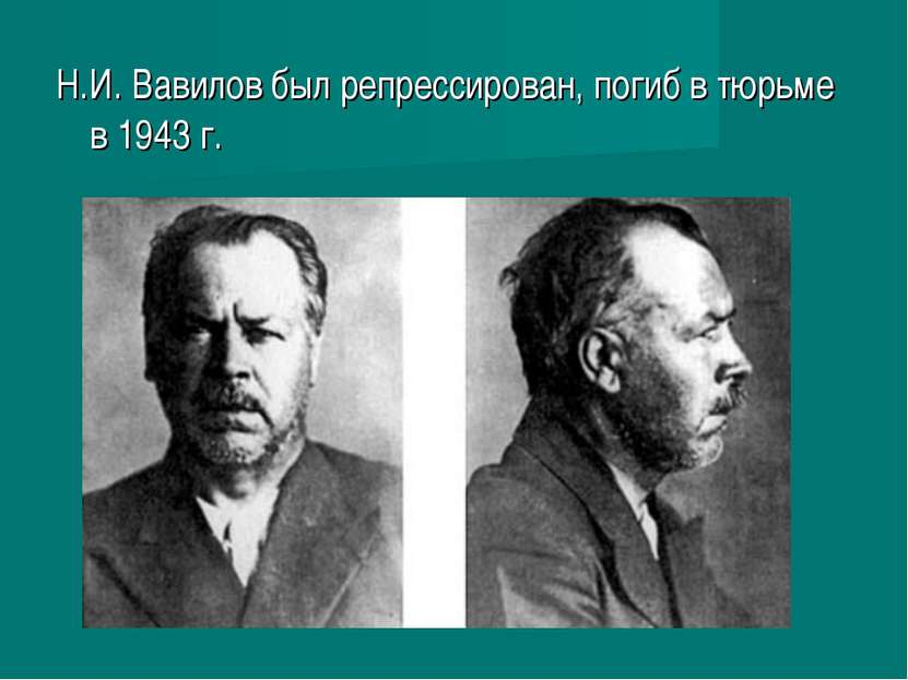 Н.И. Вавилов был репрессирован, погиб в тюрьме в 1943г.