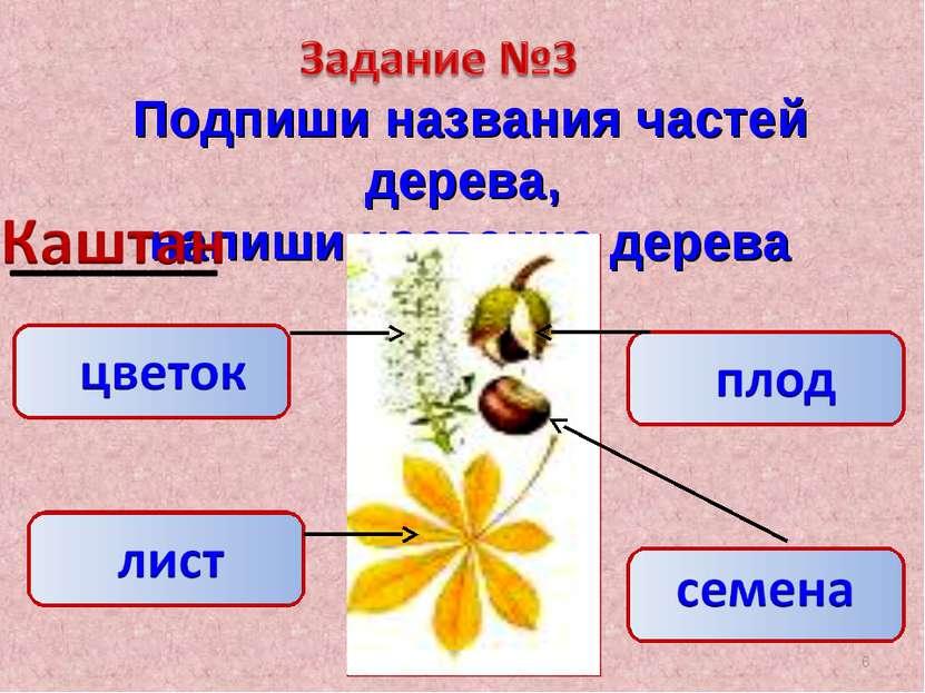Подпиши названия частей дерева, напиши название дерева *