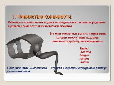 1. Членистые конечности. Конечности членистоногих подвижно соединяются с тело...