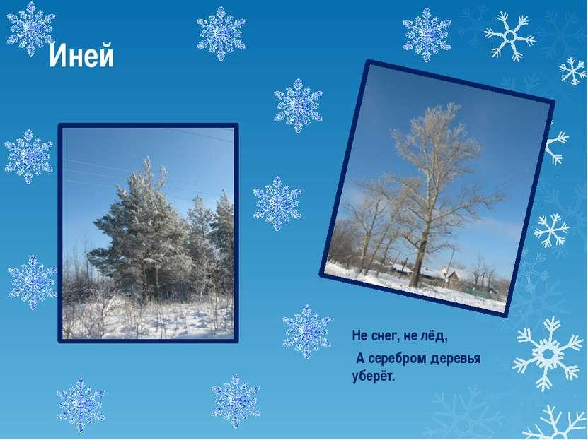 Иней Не снег, не лёд, А серебром деревья уберёт.