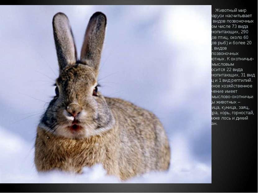 Животный мир Беларуси насчитывает 457 видов позвоночных (в том числе 73 вида ...