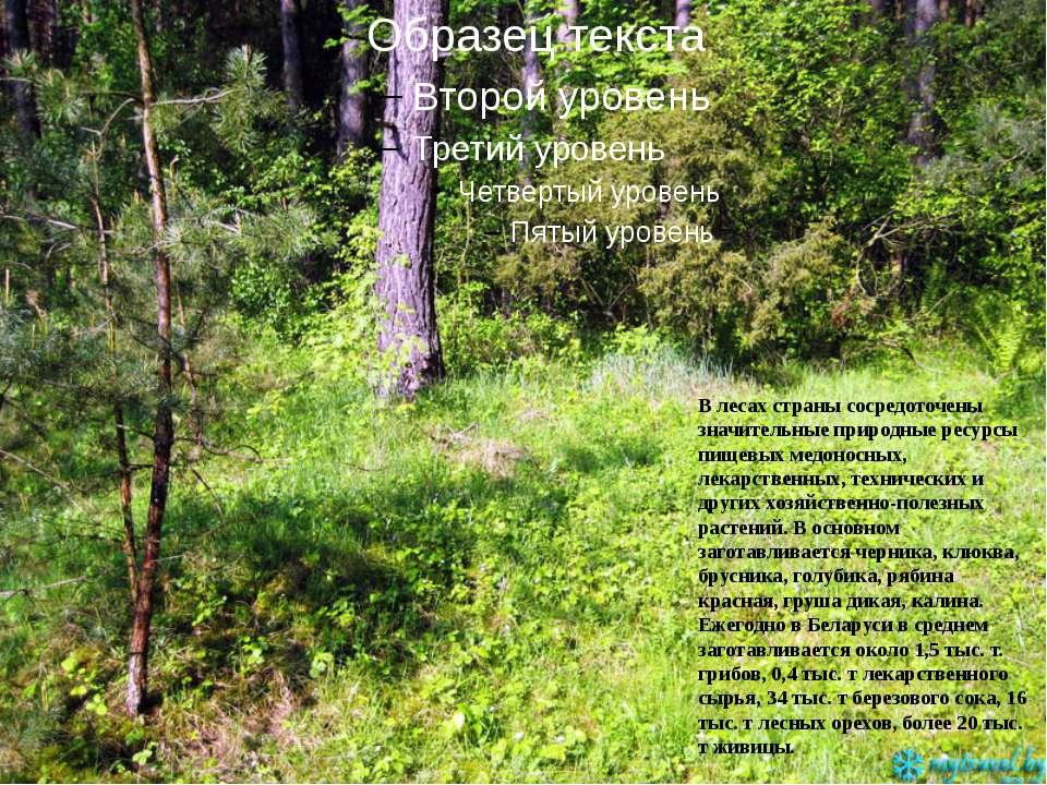 В лесах страны сосредоточены значительные природные ресурсы пищевых медоносны...