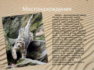Местонахождения Ирбис - высокогорный зверь. Летом он населяет пояса субал...