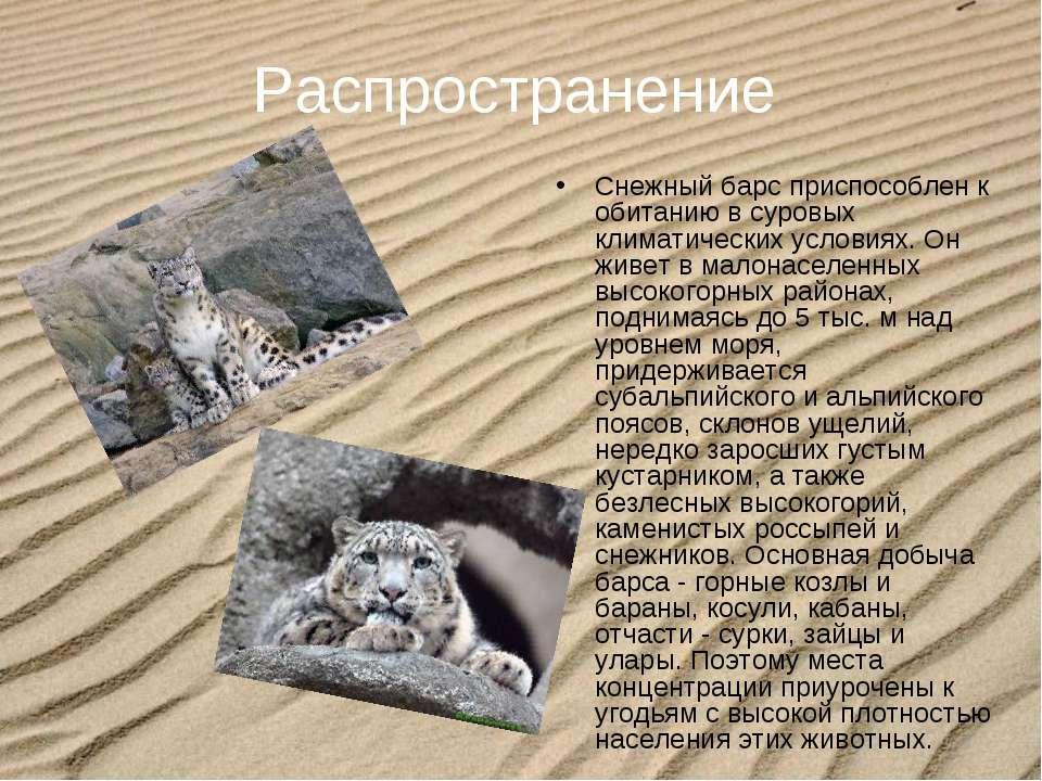 Распространение Снежный барс приспособлен к обитанию в суровых климатических ...
