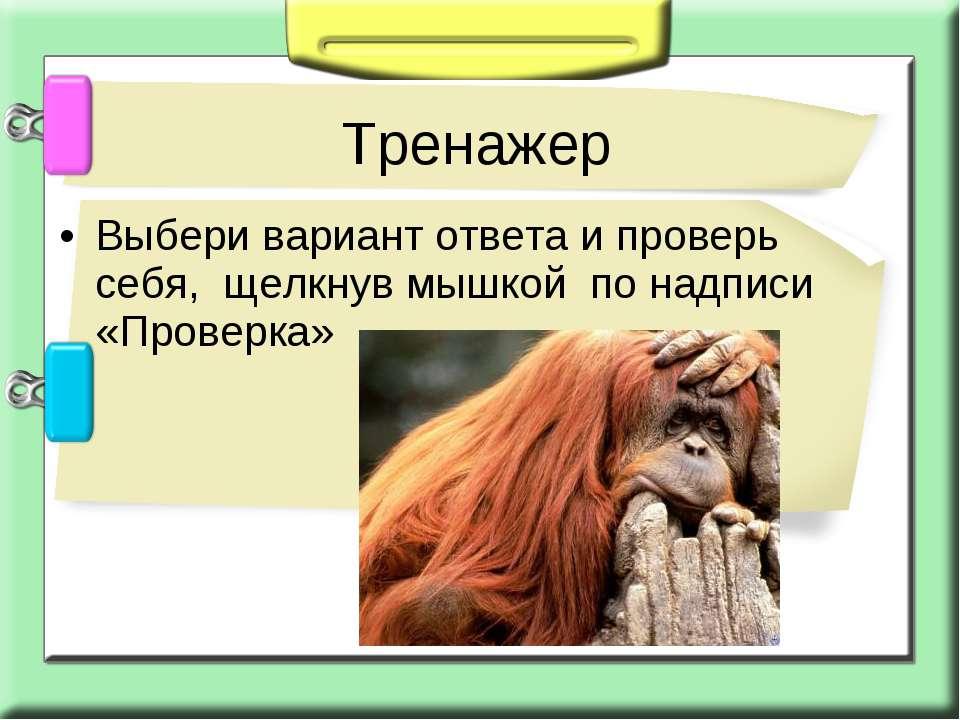 Выбери вариант ответа и проверь себя, щелкнув мышкой по надписи «Проверка» Тр...