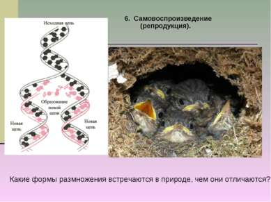 6. Самовоспроизведение (репродукция). Какие формы размножения встречаются в п...
