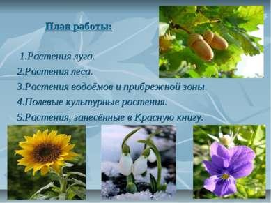 План работы: 1.Растения луга. 2.Растения леса. 3.Растения водоёмов и прибрежн...