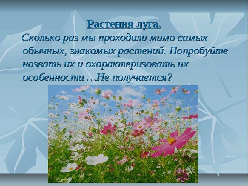 Растения луга. Сколько раз мы проходили мимо самых обычных, знакомых растений...