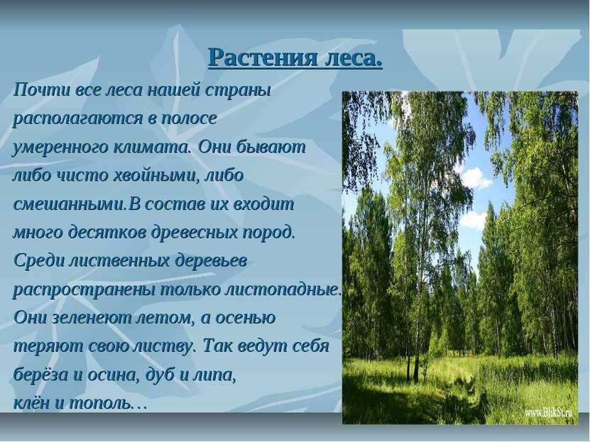 Растения леса. Почти все леса нашей страны располагаются в полосе умеренного ...