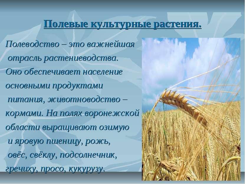 Полевые культурные растения. Полеводство – это важнейшая отрасль растениеводс...