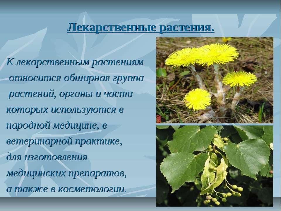 Лекарственные растения. К лекарственным растениям относится обширная группа р...