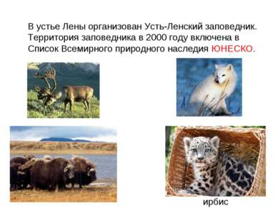 В устье Лены организован Усть-Ленский заповедник. Территория заповедника в 20...
