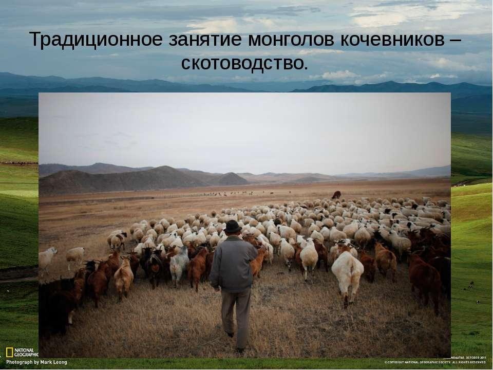 Традиционное занятие монголов кочевников – скотоводство.