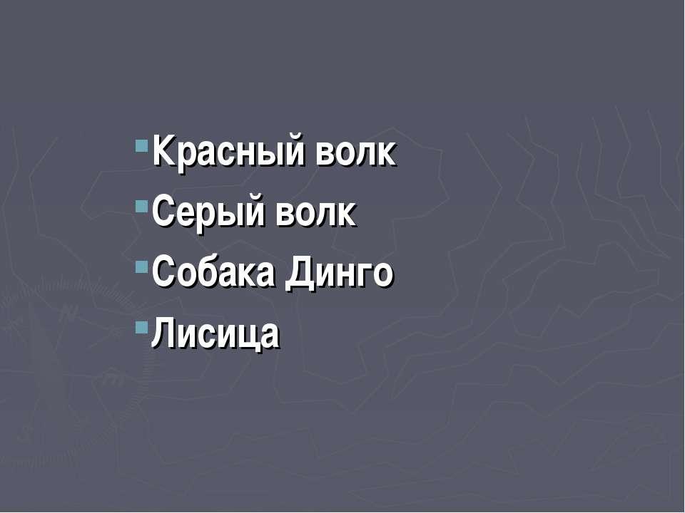 Красный волк Серый волк Собака Динго Лисица