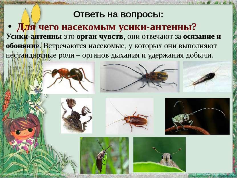 Развитие мухи: яйца В качестве колыбели для откладки яиц муха-мамаша предпочи...