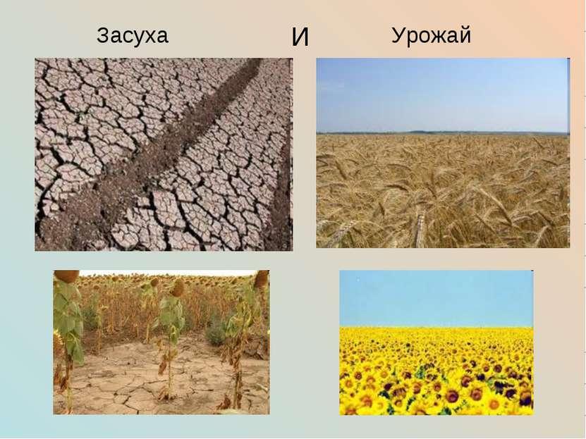 Засуха И Урожай