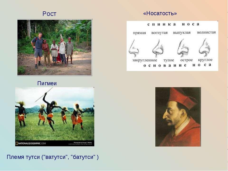 """Пигмеи Рост «Носатость» Племя тутси (""""ватутси"""", """"батутси"""" )"""