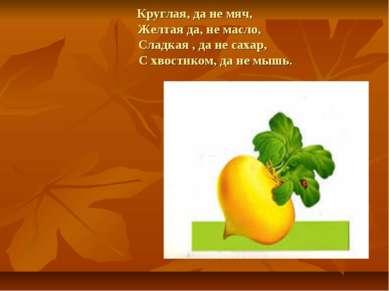 Круглая, да не мяч, Желтая да, не масло, Сладкая , да не сахар, С хвостиком, ...