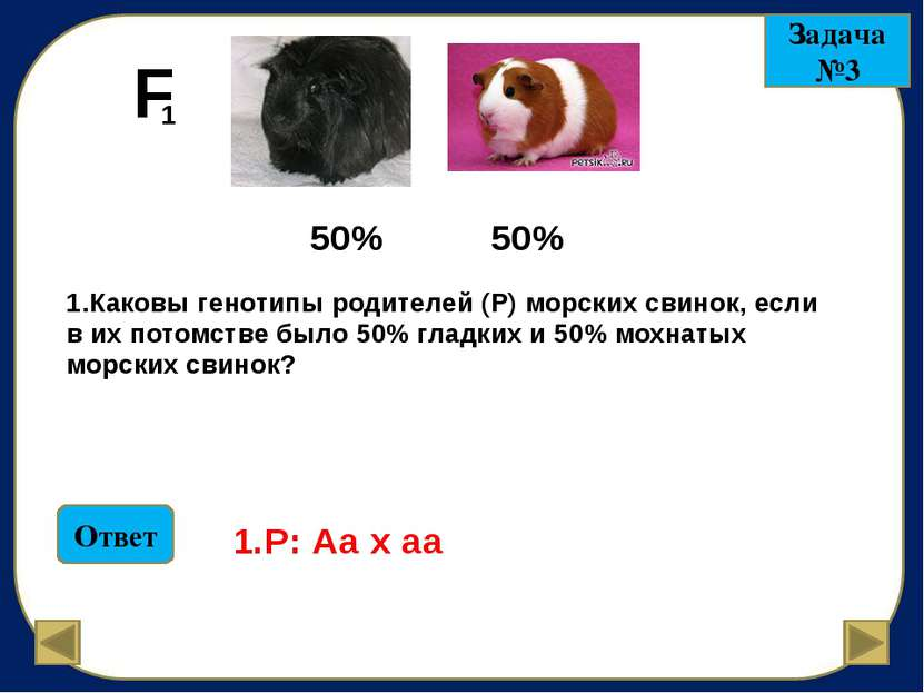 У кролика черная пигментация шерсти доминирует над альбинизмом (белая шерсть ...