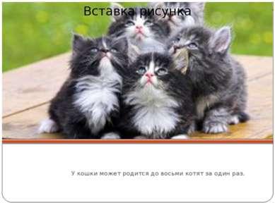 У кошки может родится до восьми котят за один раз.