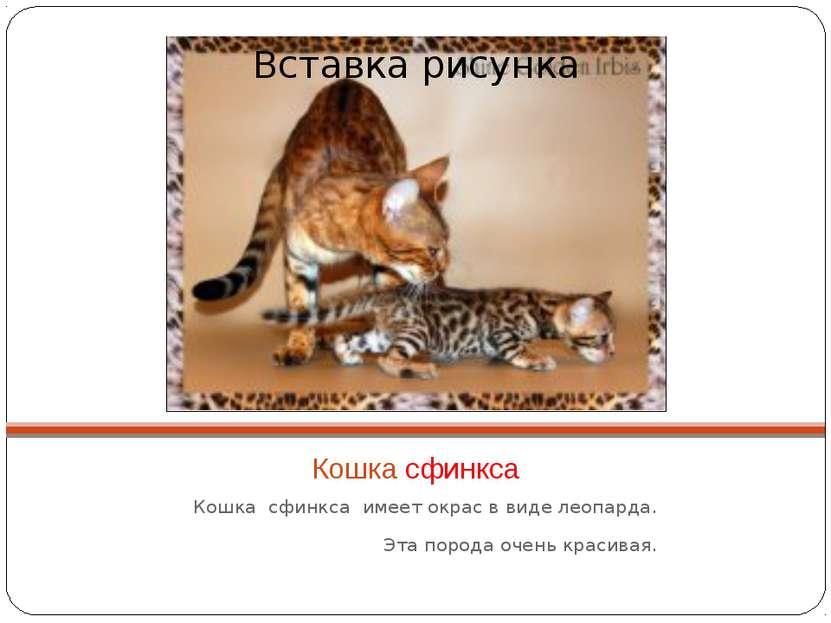 Кошка сфинкса Кошка сфинкса имеет окрас в виде леопарда. Эта порода очень кра...