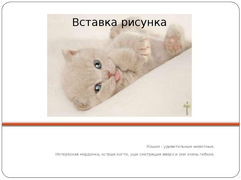 Кошки - удивительные животные. Интересная мордочка, острые когти, уши смотрящ...
