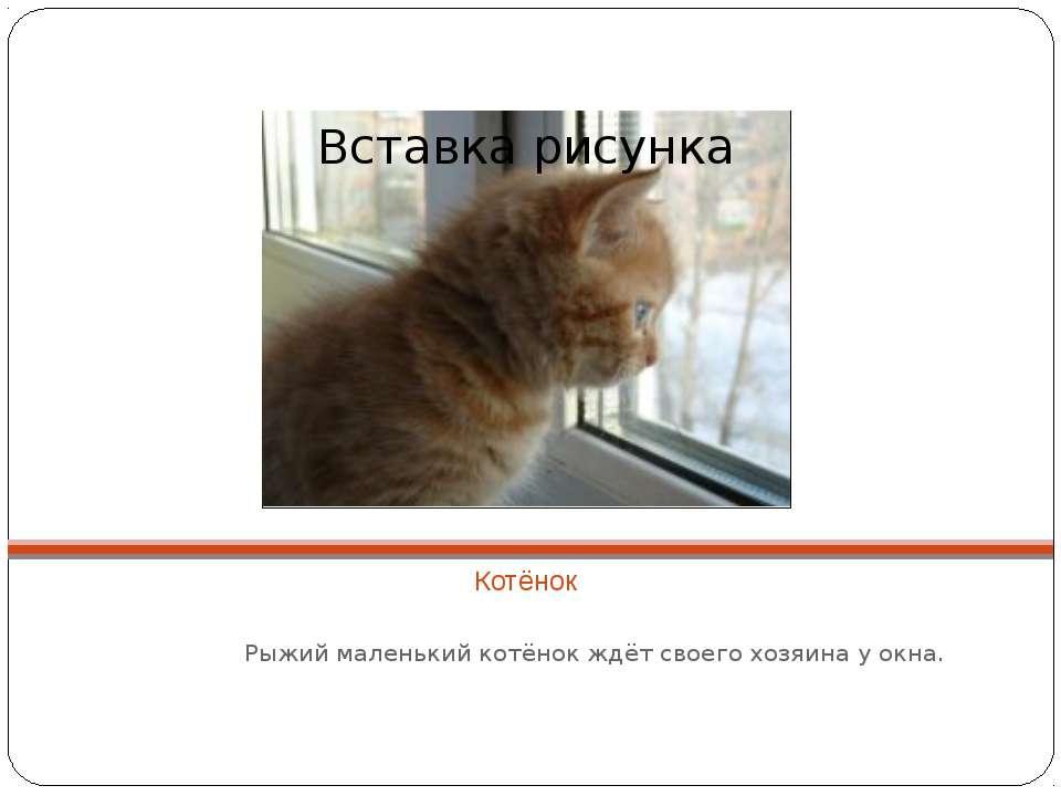 Котёнок Рыжий маленький котёнок ждёт своего хозяина у окна.