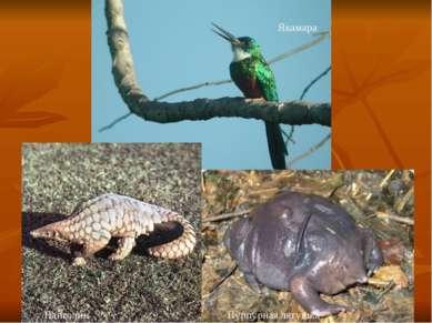 Якамара Пурпурная лягушка Панголин