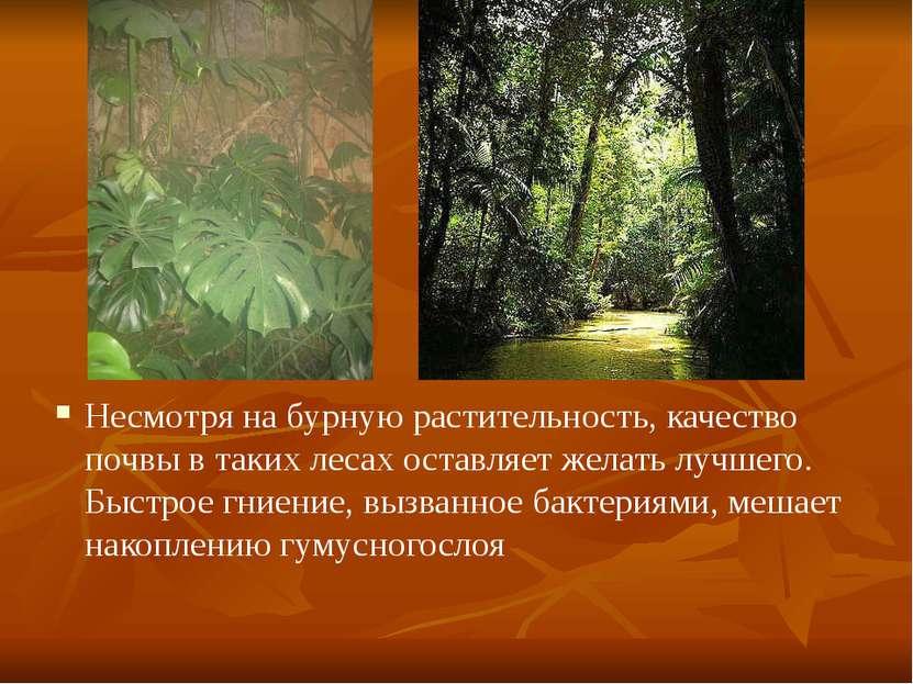 Несмотря на бурную растительность, качество почвы в таких лесах оставляет жел...