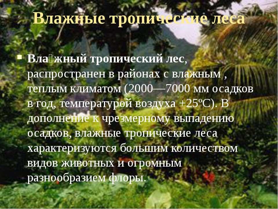Влажные тропические леса Вла жный тропический лес, распространен в районах с ...