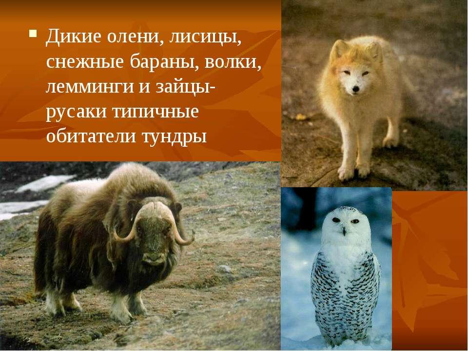 Дикие олени, лисицы, снежные бараны, волки, лемминги и зайцы-русаки типичные ...