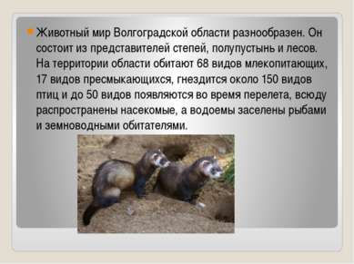 Животный мир Волгоградской области разнообразен. Он состоит из представителей...