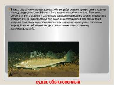 В реках, озерах, искусственных водоемах обитают рыбы, ценные в промысловом от...