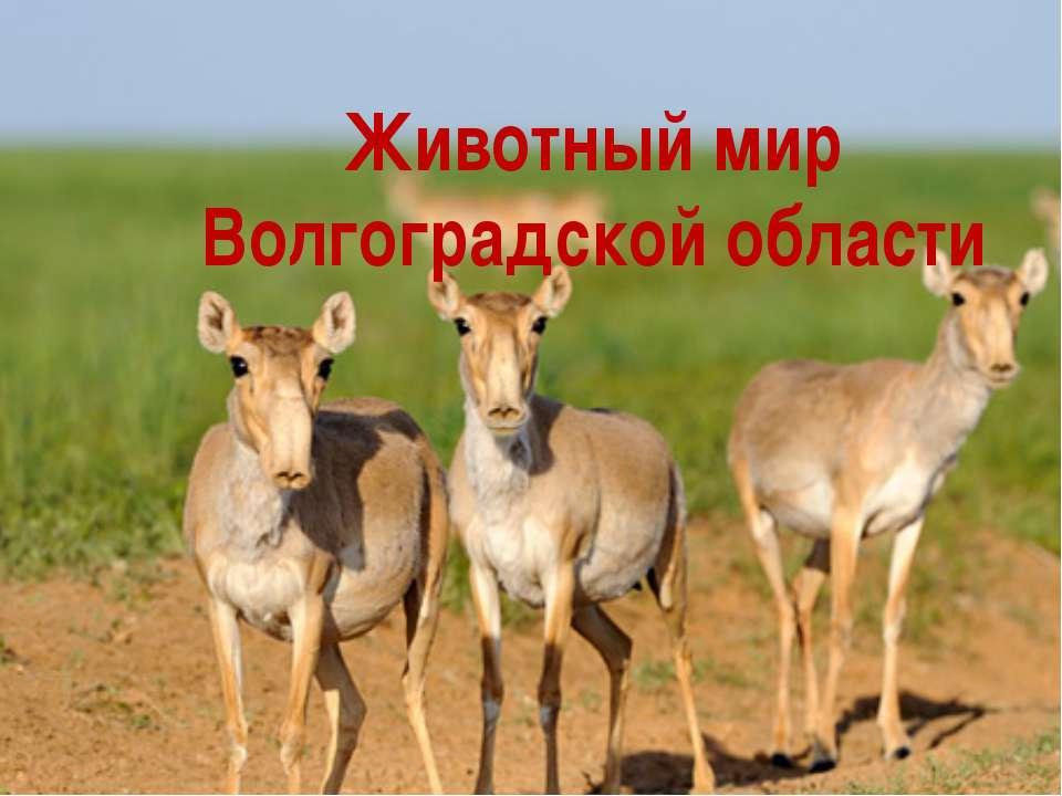 Животный мир Волгоградской области