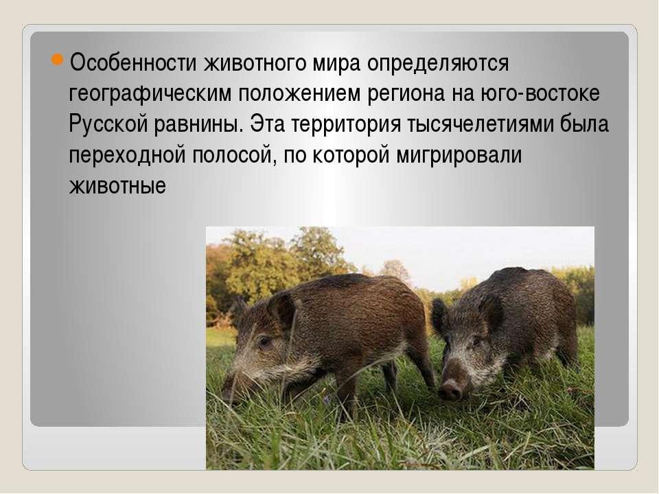 Особенности животного мира определяются географическим положением региона на ...