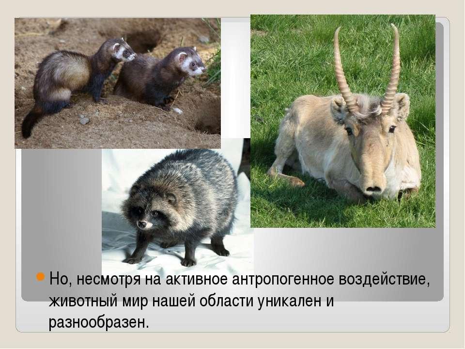 Но, несмотря на активное антропогенное воздействие, животный мир нашей област...