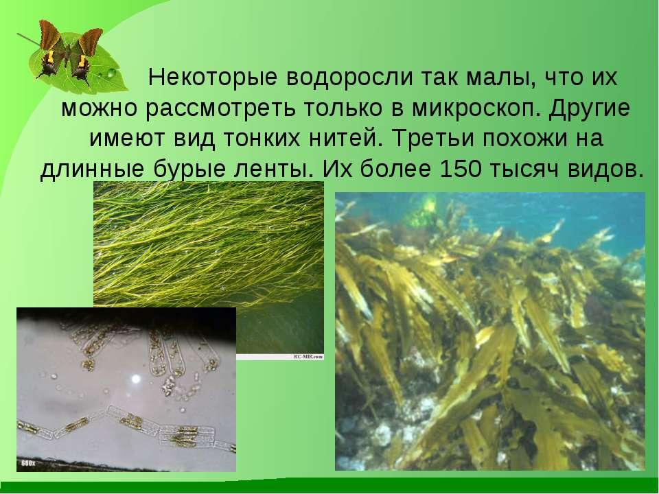 Некоторые водоросли так малы, что их можно рассмотреть только в микроскоп. Др...