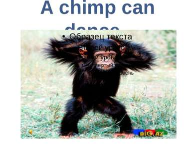 A chimp can dance.